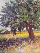 tree20140504_095537
